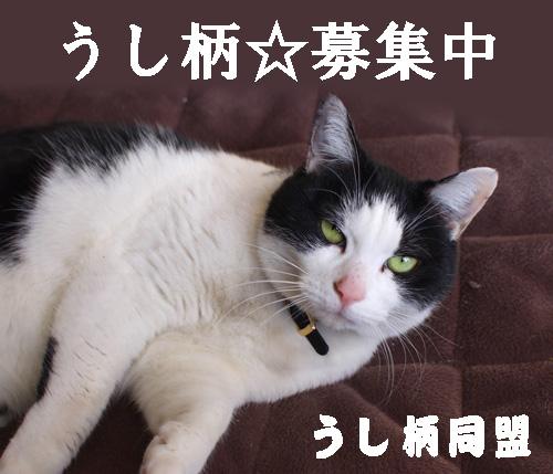so-net62288.jpg