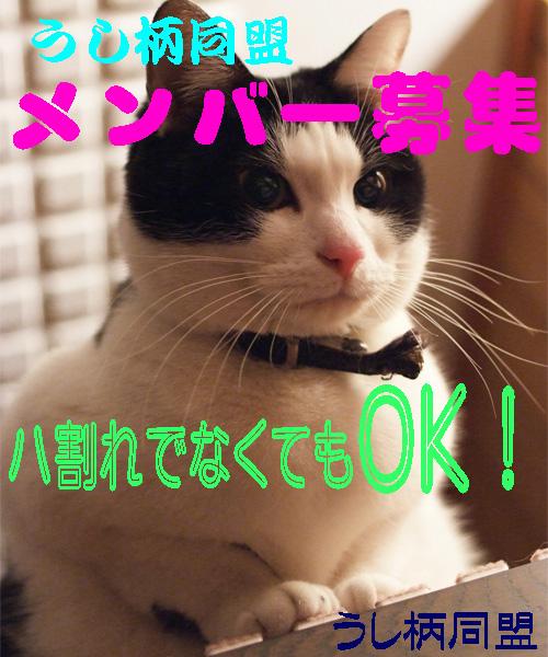 ポスター090420.jpg